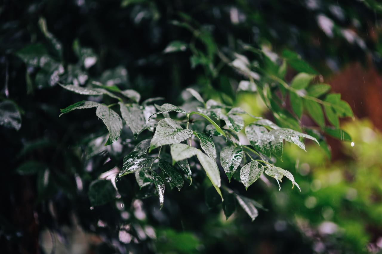 kaboompics_Wet garden_letni_deszcz